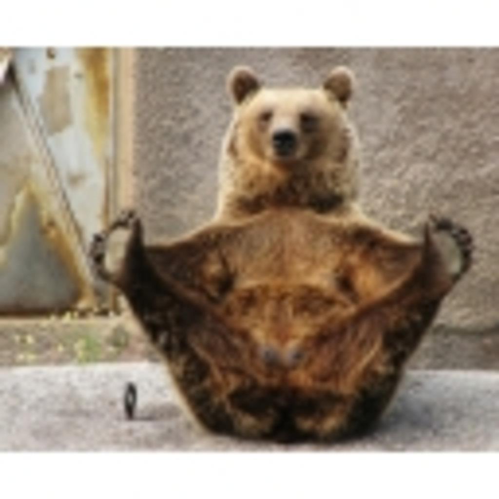 素敵熊式ほーそー