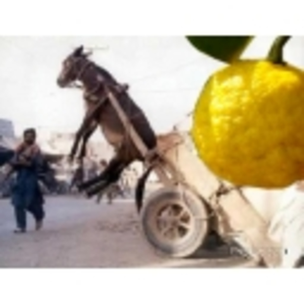 柑橘系放送