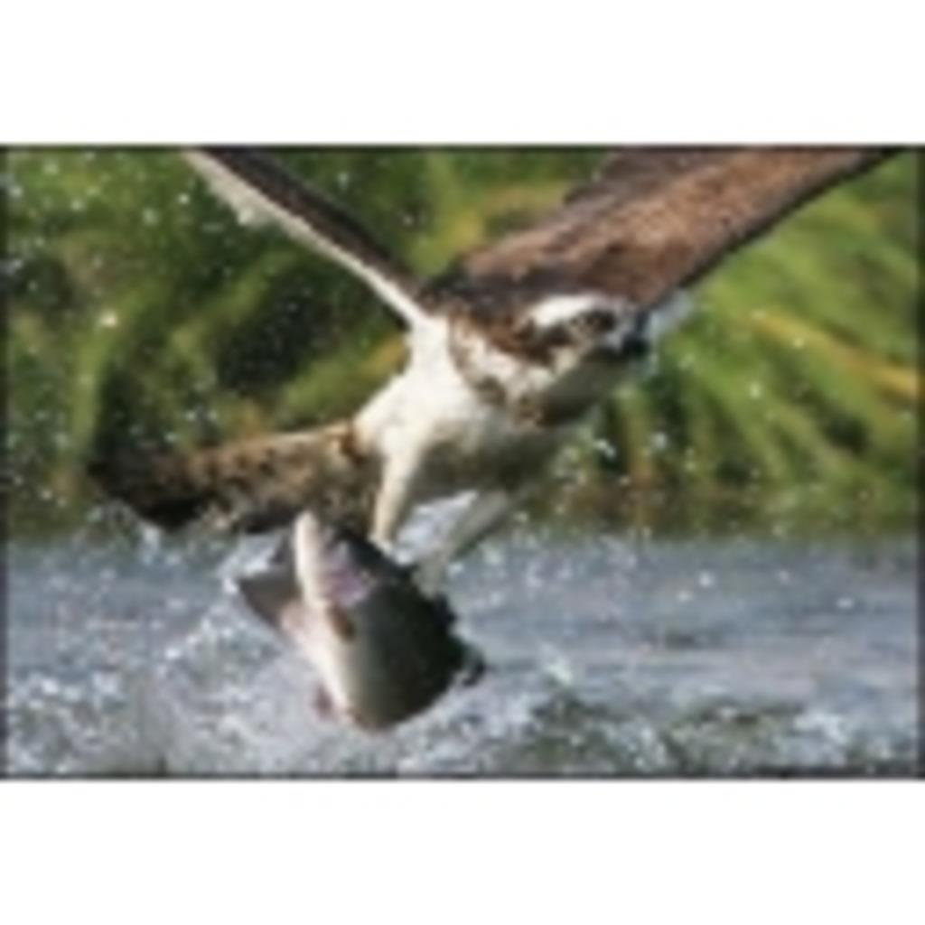 河の鷹のグダグダラダラ配信
