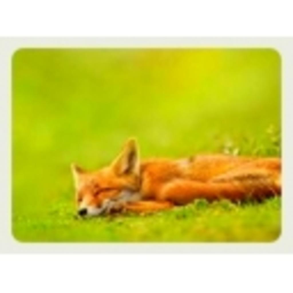 *お狐こんこん*