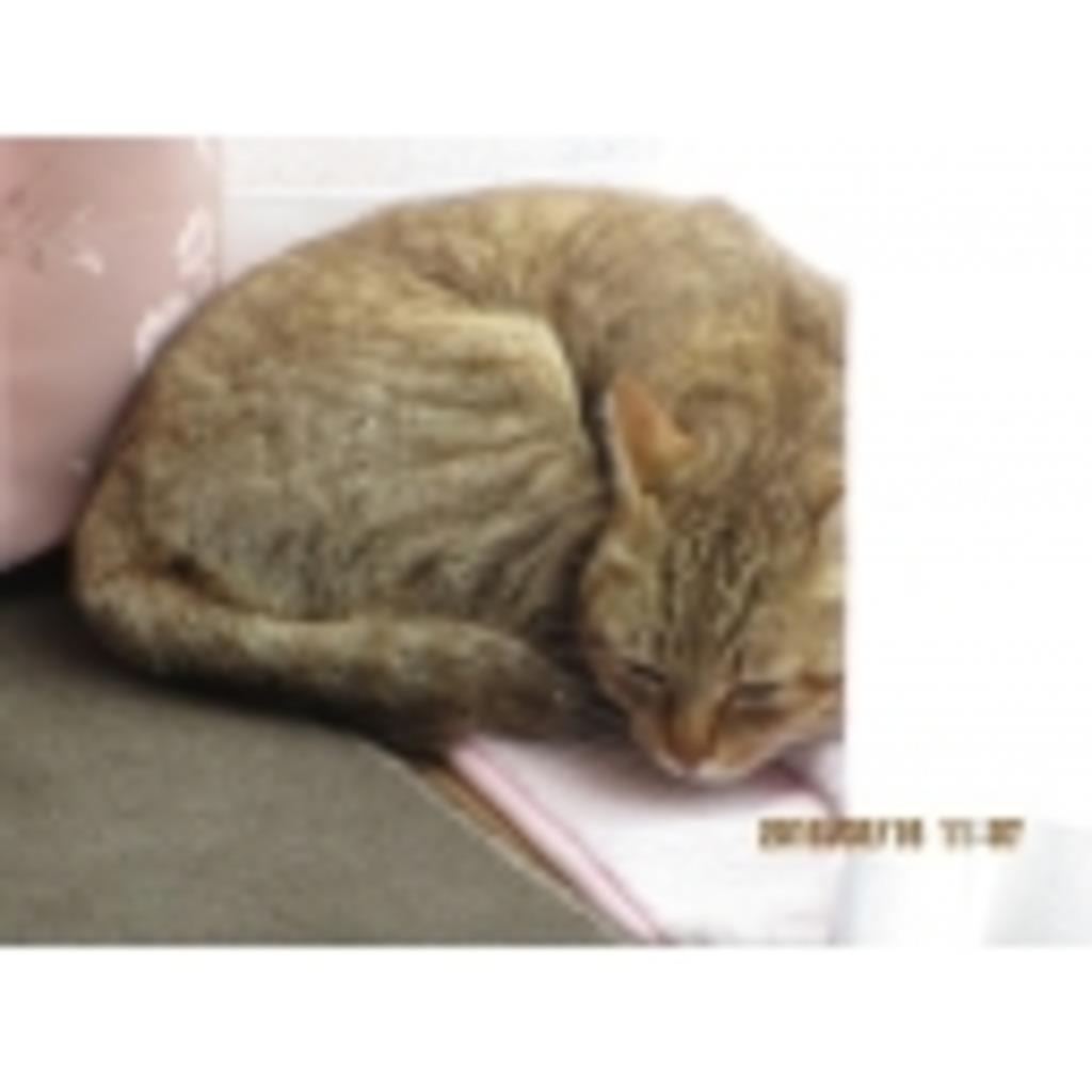 元野良猫キジトラ・レイの生活