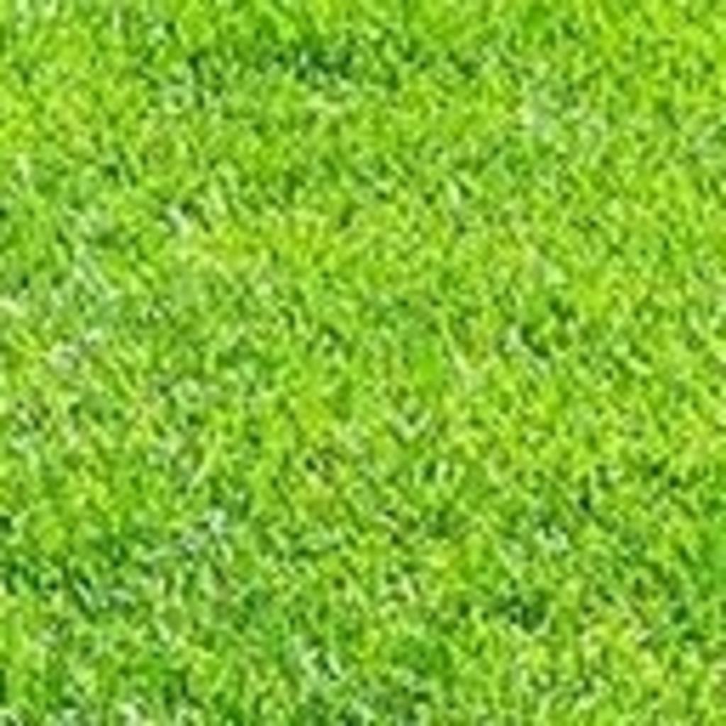 隣の芝は云々かんぬん