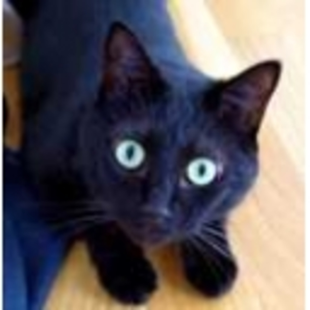 黒猫の配信