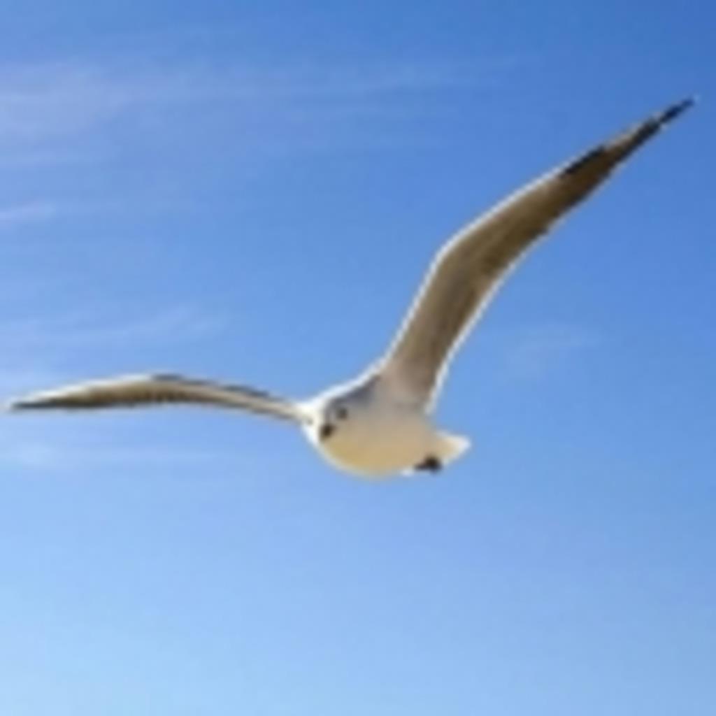 ♖空を翔ける鳥のように……♖