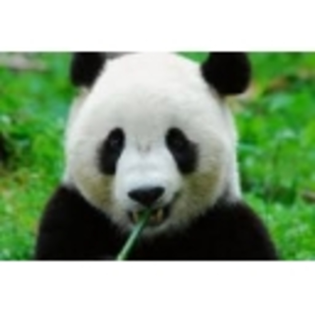 パンダによるパンダのためのパンダ