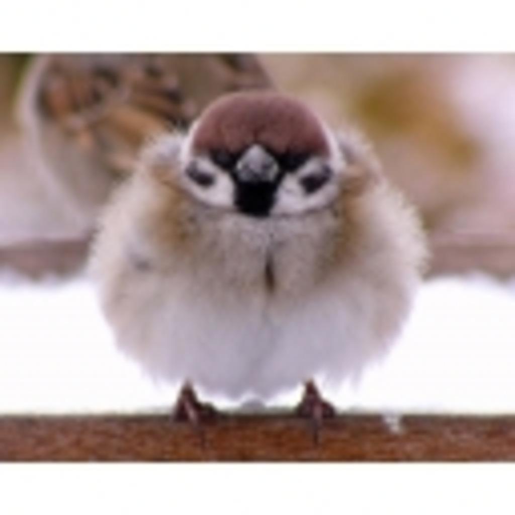 鳥類♂がゲームしてく