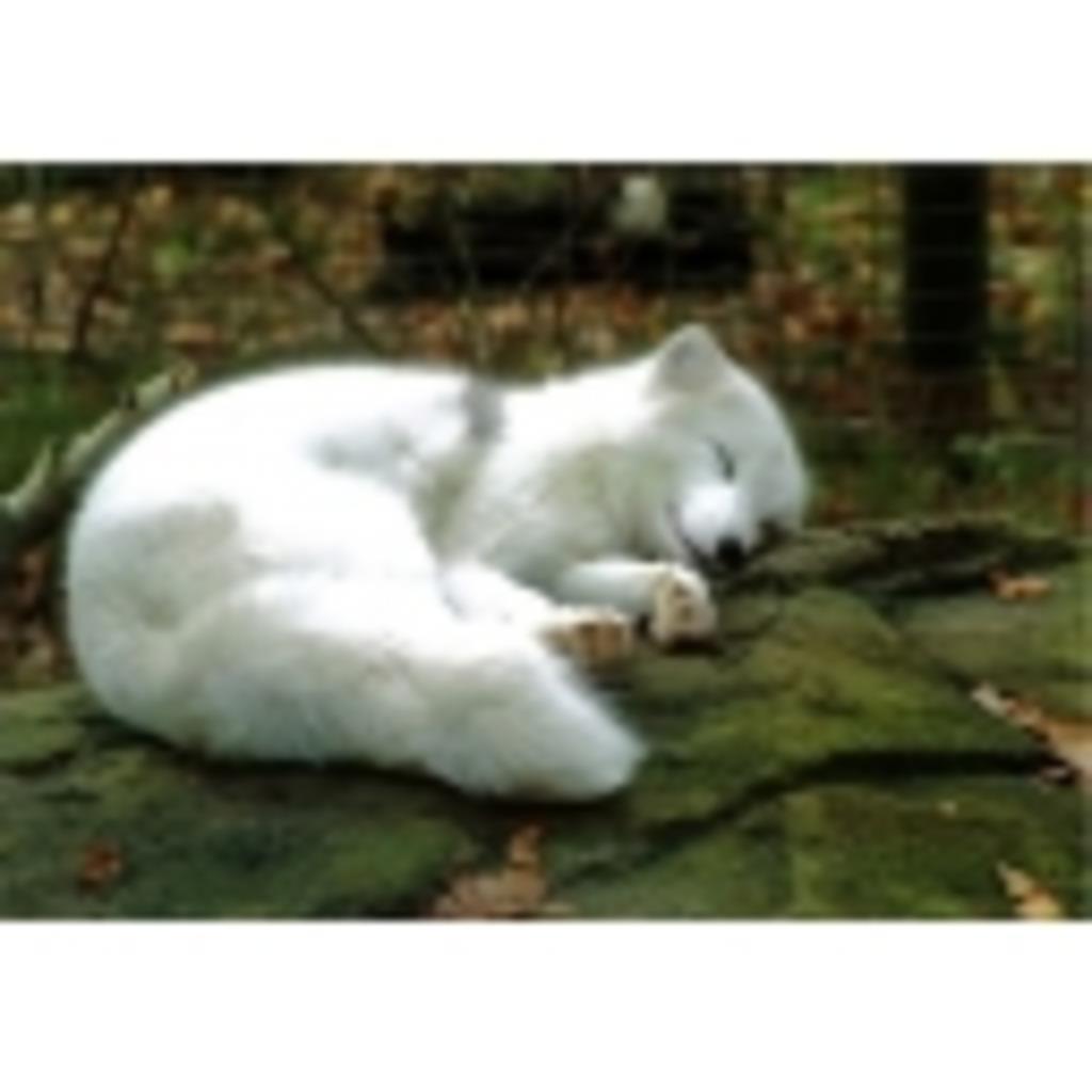 白狐のまったり放送局