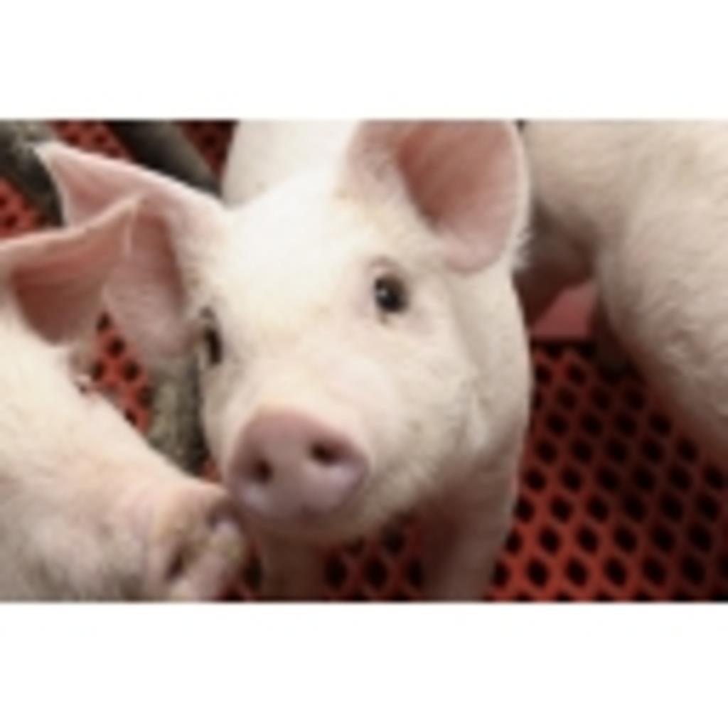 養豚場からゲーム配信