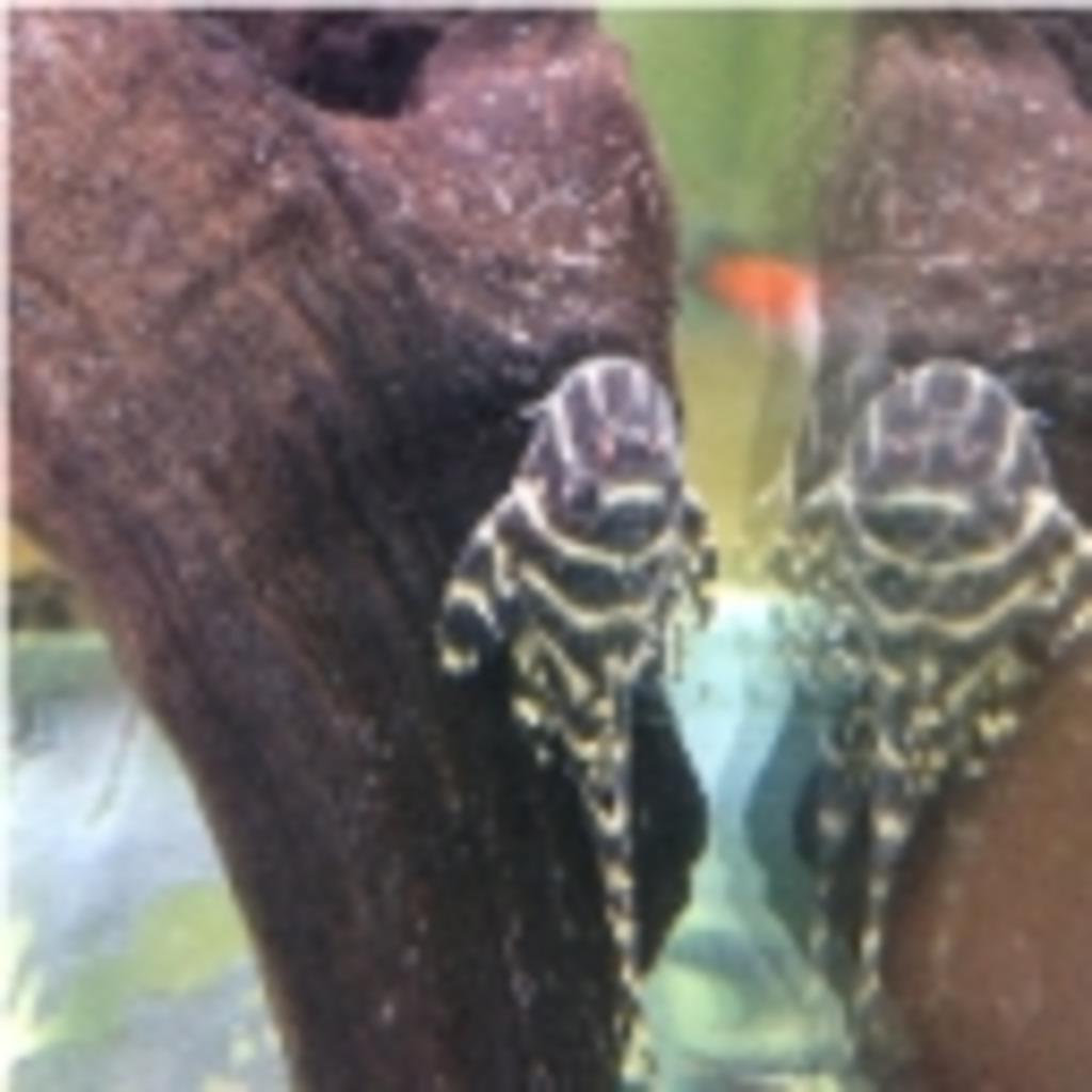 熱帯魚について語るコミュ