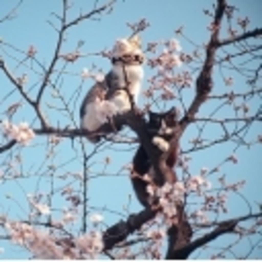 居酒屋『夢の木』猫の実支店