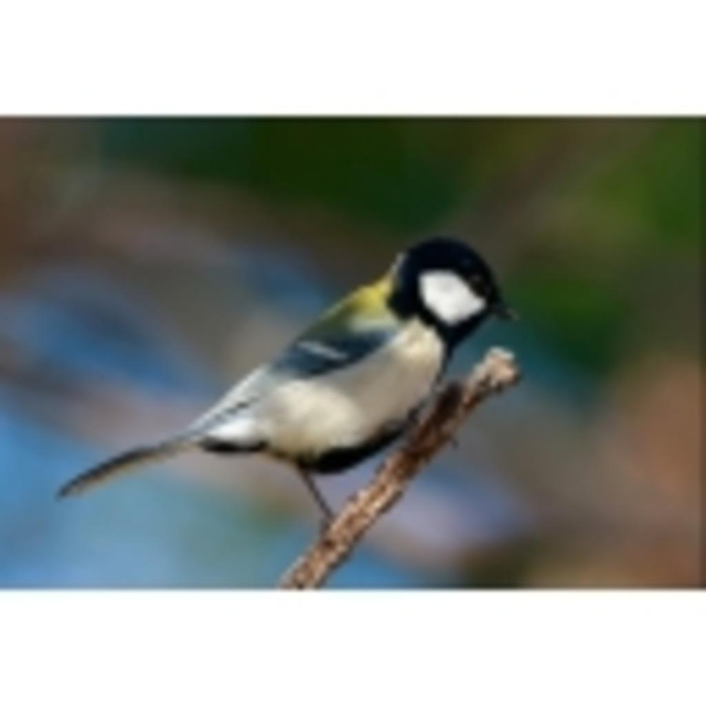 鳥の巣観察