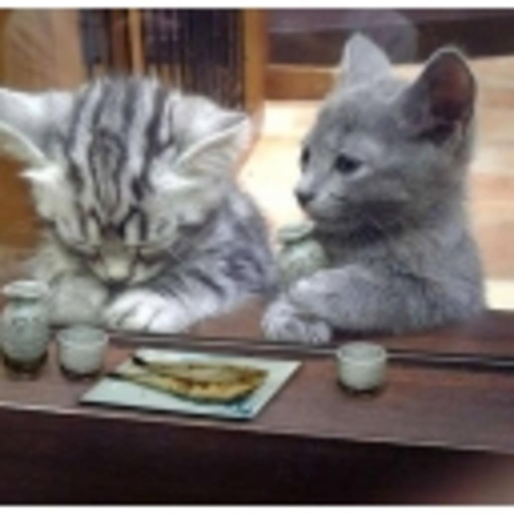 山猫達のお茶会
