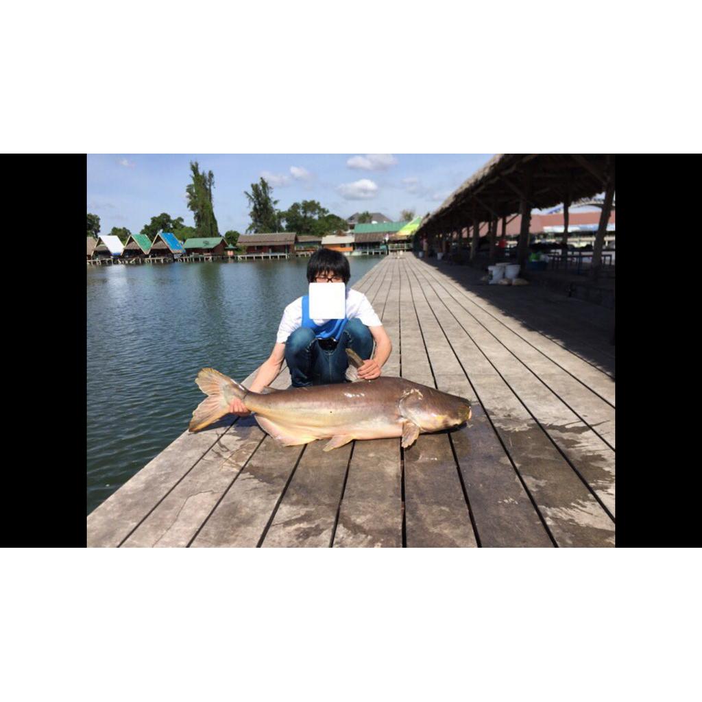 アランサ・リターン!!魚釣りに命かけ