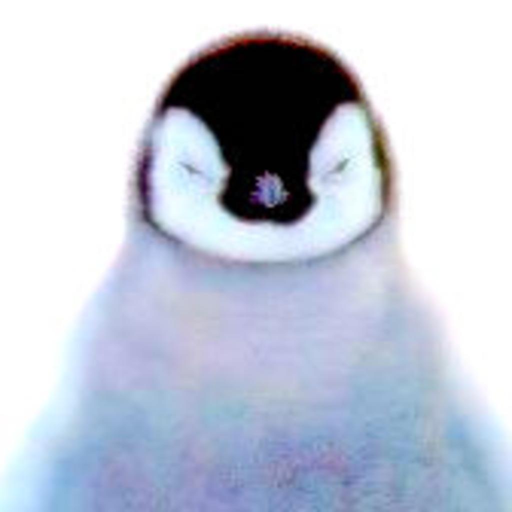 ぺん(オールナイト・ペンギン)の生放送