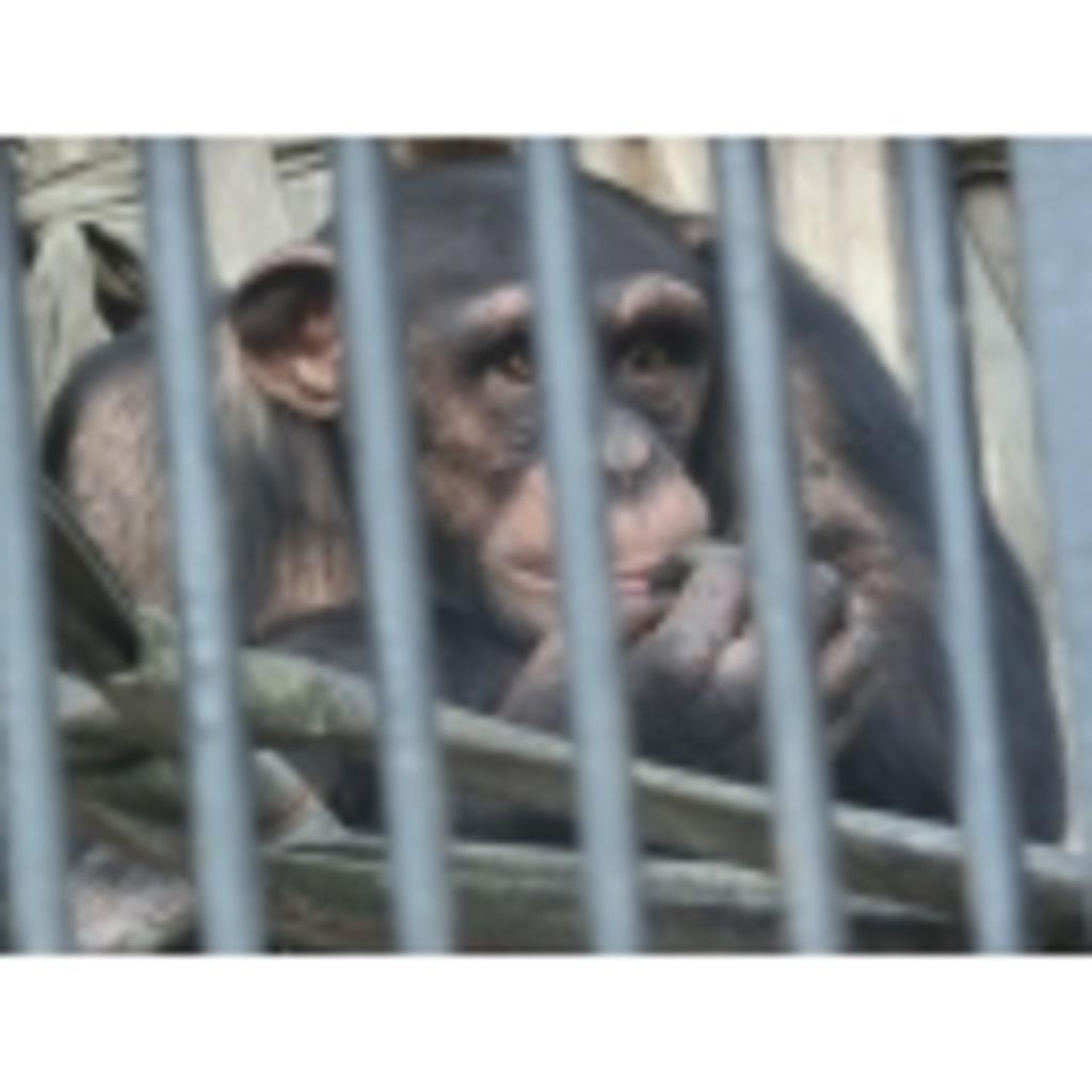 MMD動物園