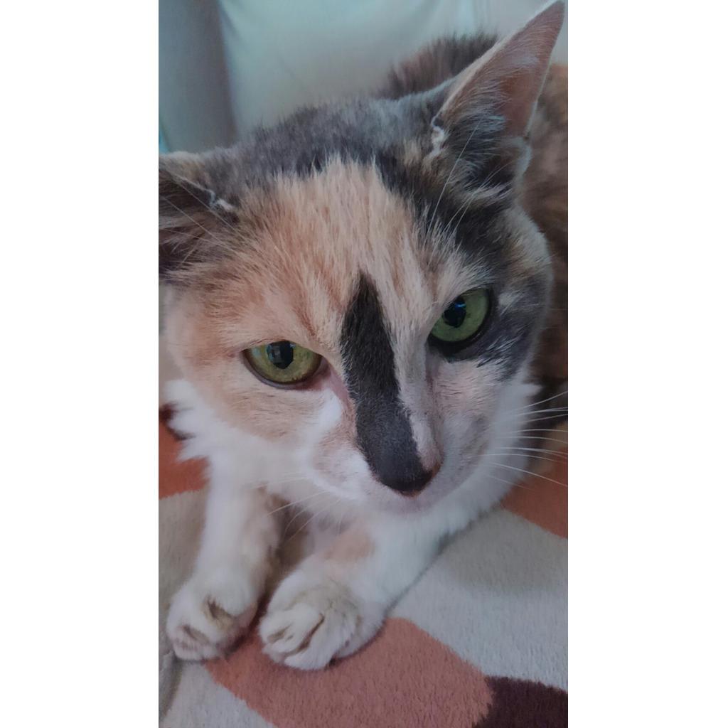 ハッピー☆トリガーさんの猫ミュニティ