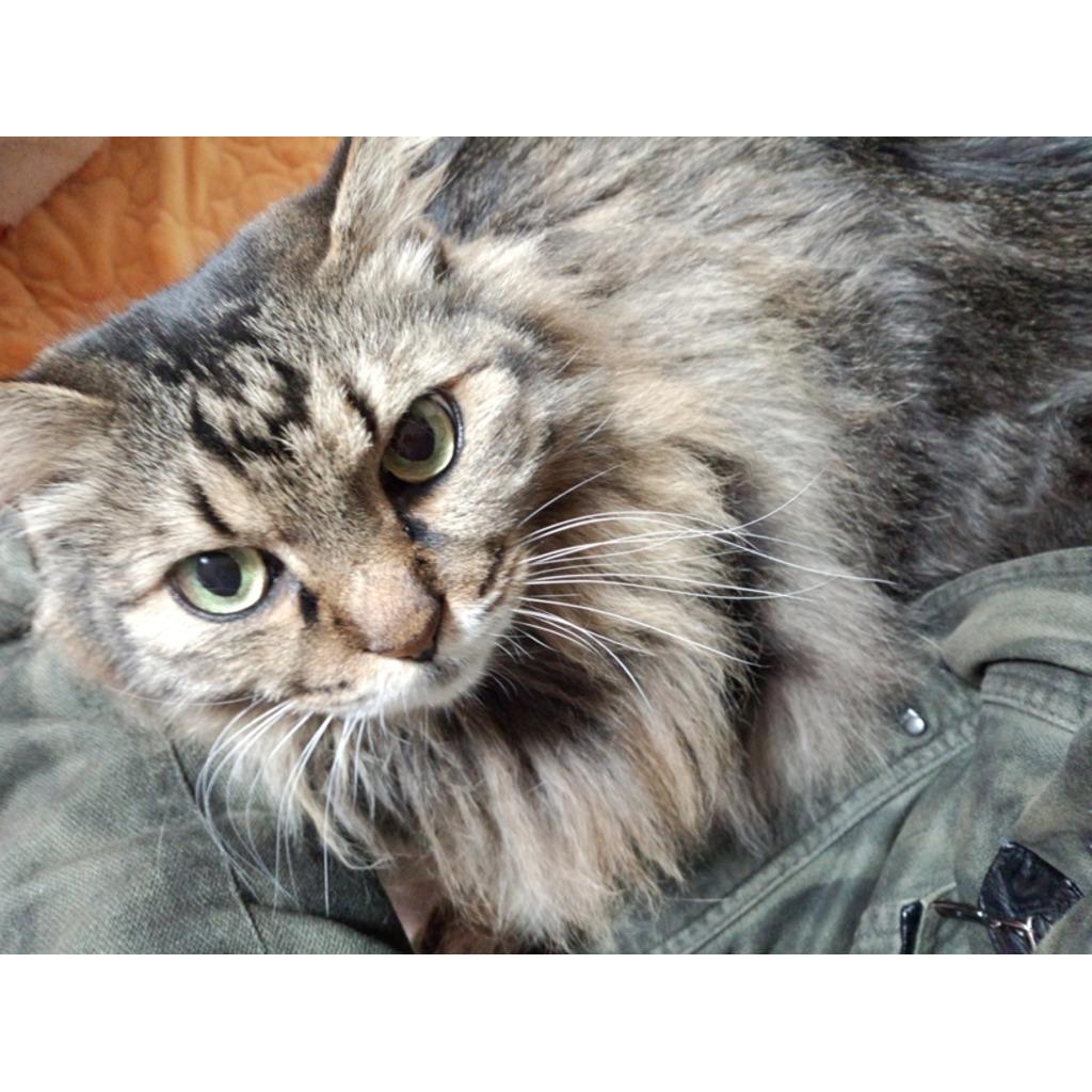 猫好き&愛猫家の部屋