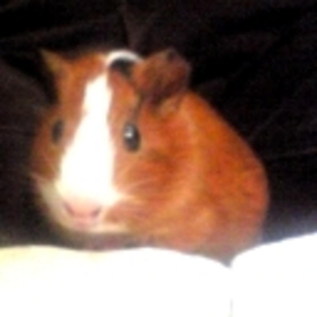 小動物好きなキュルルルル
