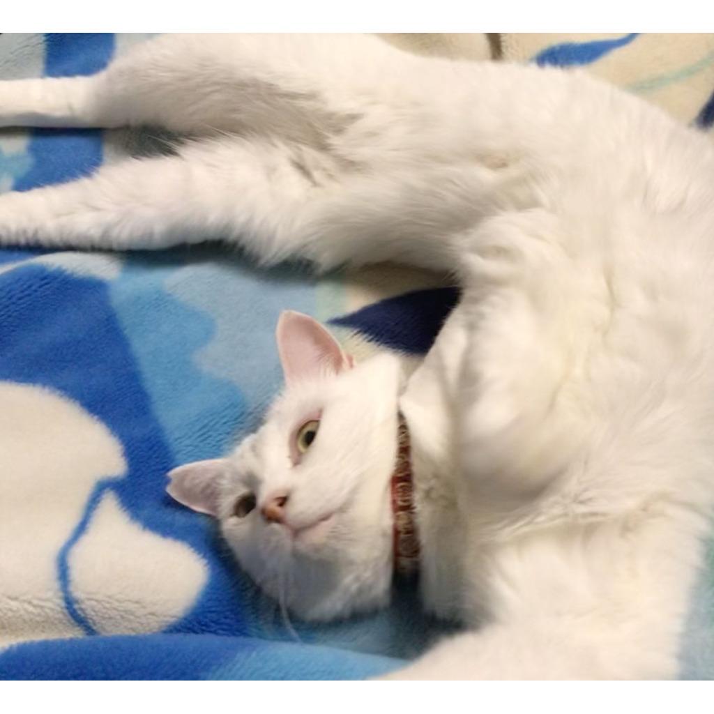 保護猫キョロとゲーム
