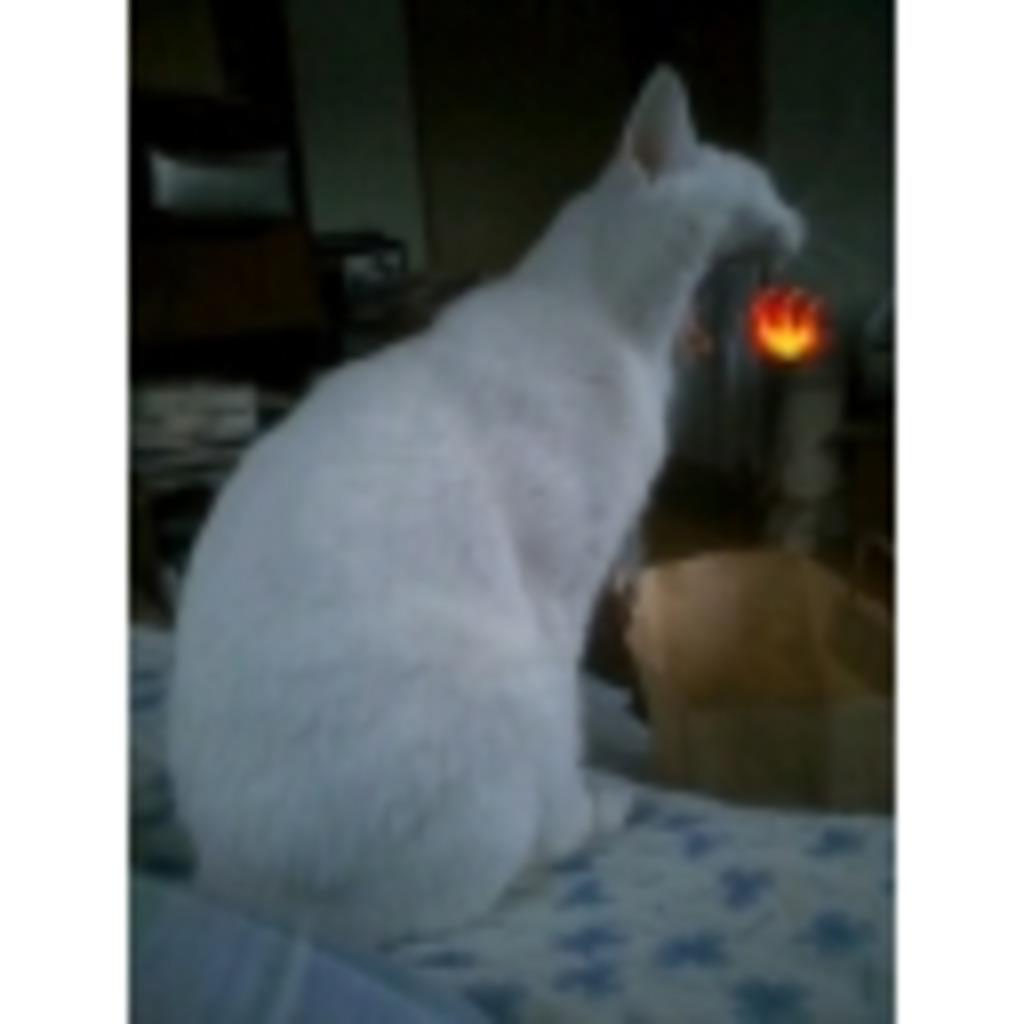 猫神の度し難い放送