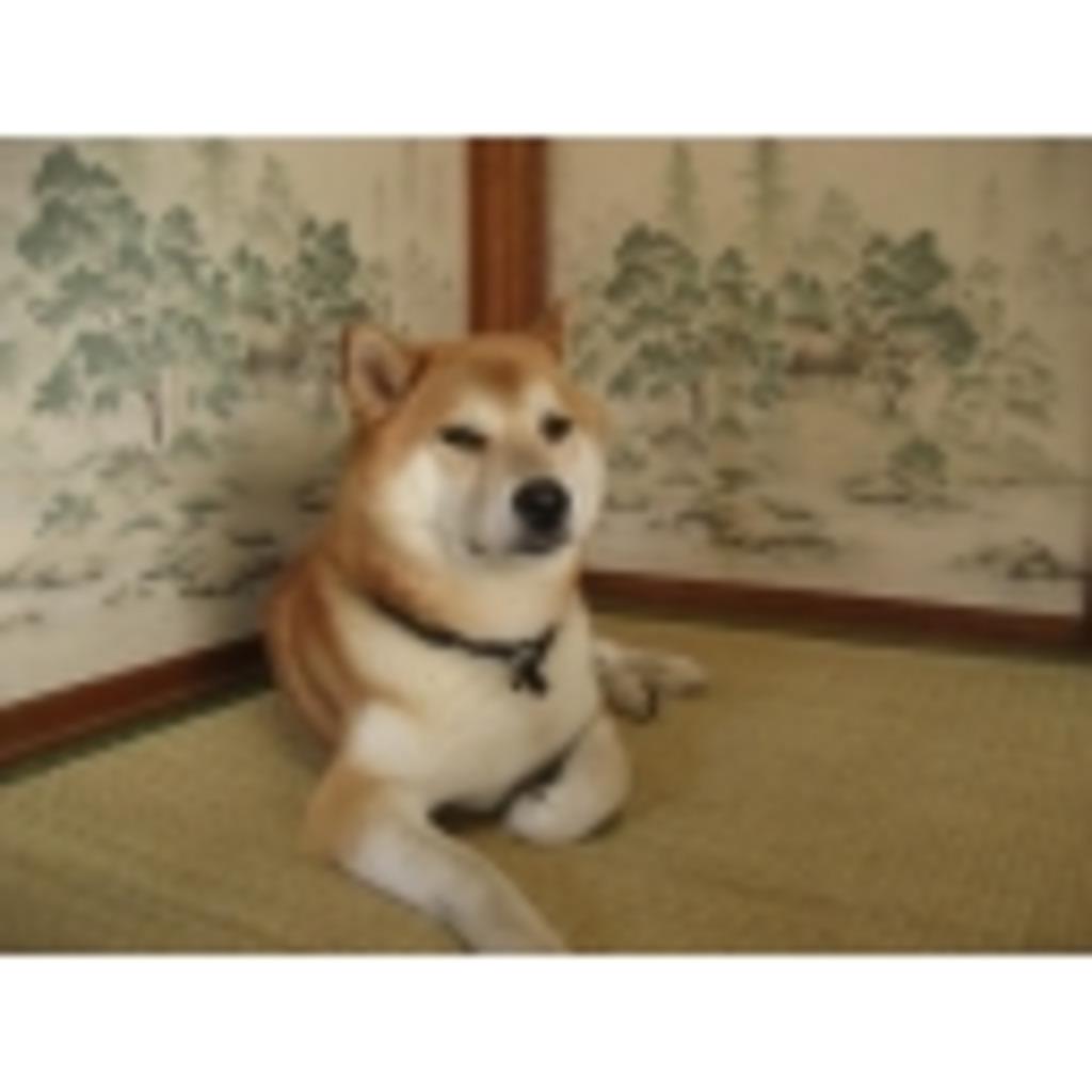 座敷犬の勝手にしやがれ!!