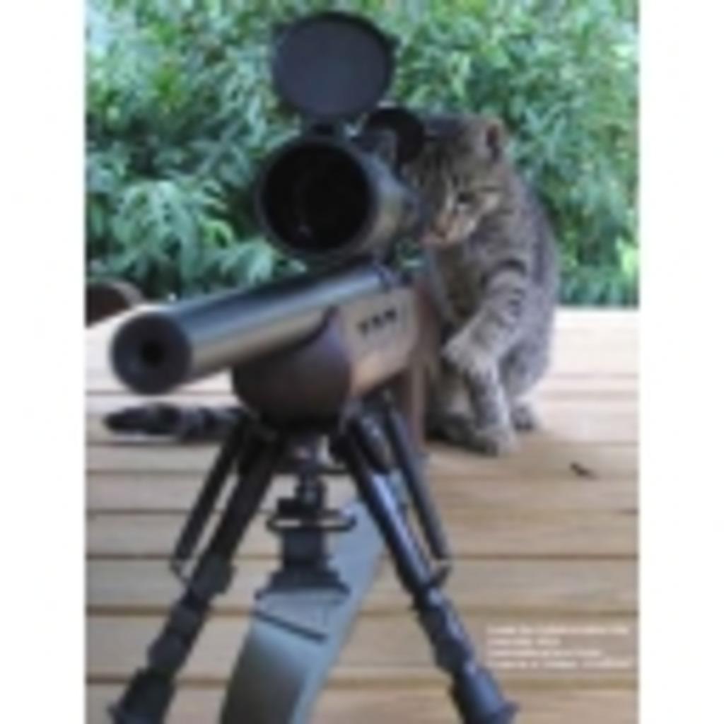 猫好き Channel