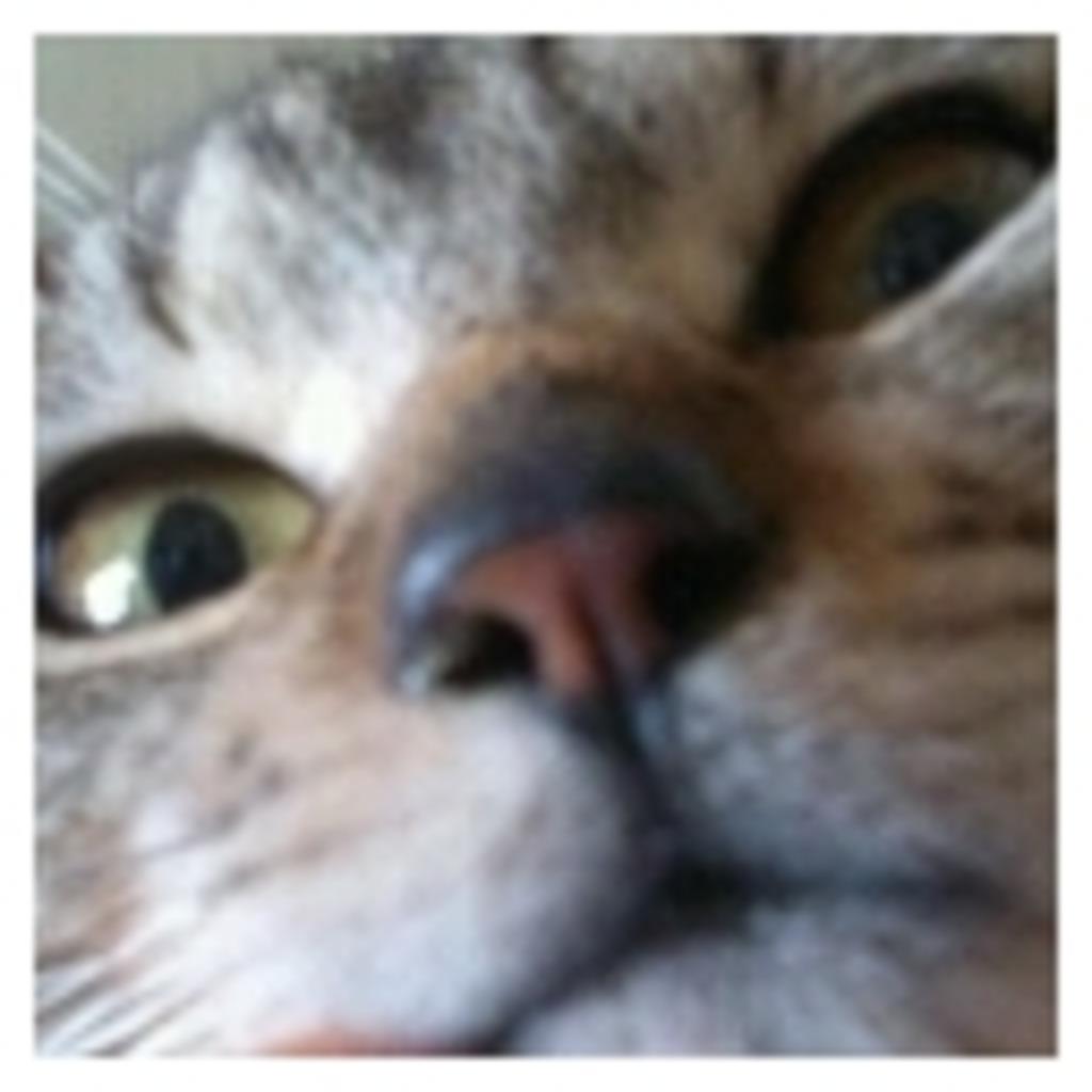 あんぢゅ家の猫