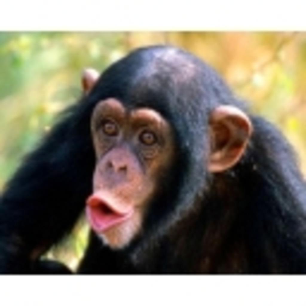 チンパンガTV
