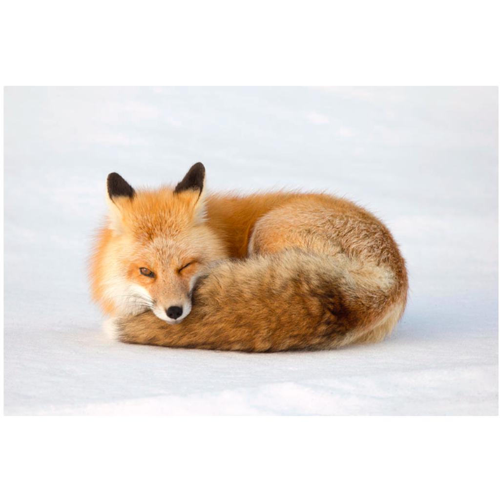 彗狐の垂れ流し隠れ部屋