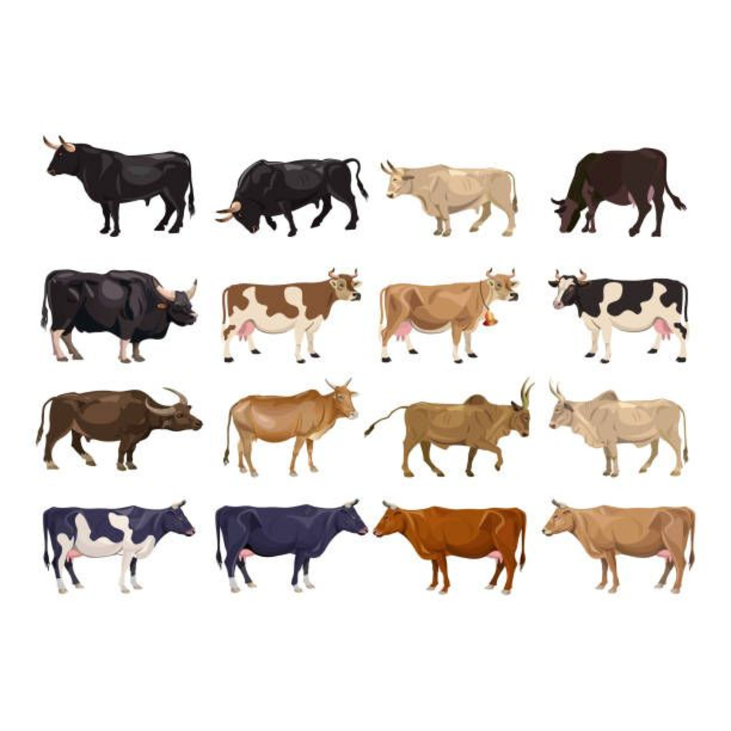 ゆっくり牛さんが通る