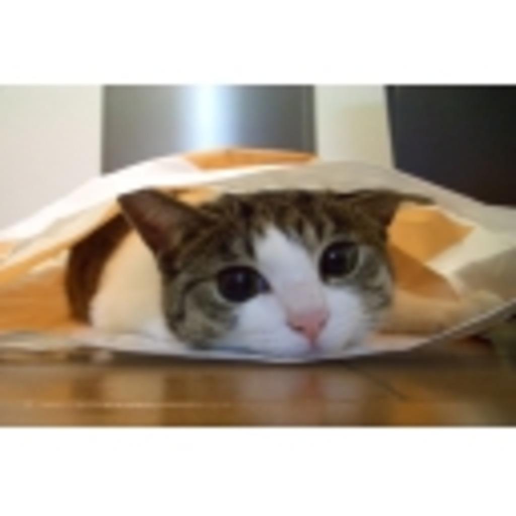 猫ミュ ~にゃんこスレ~