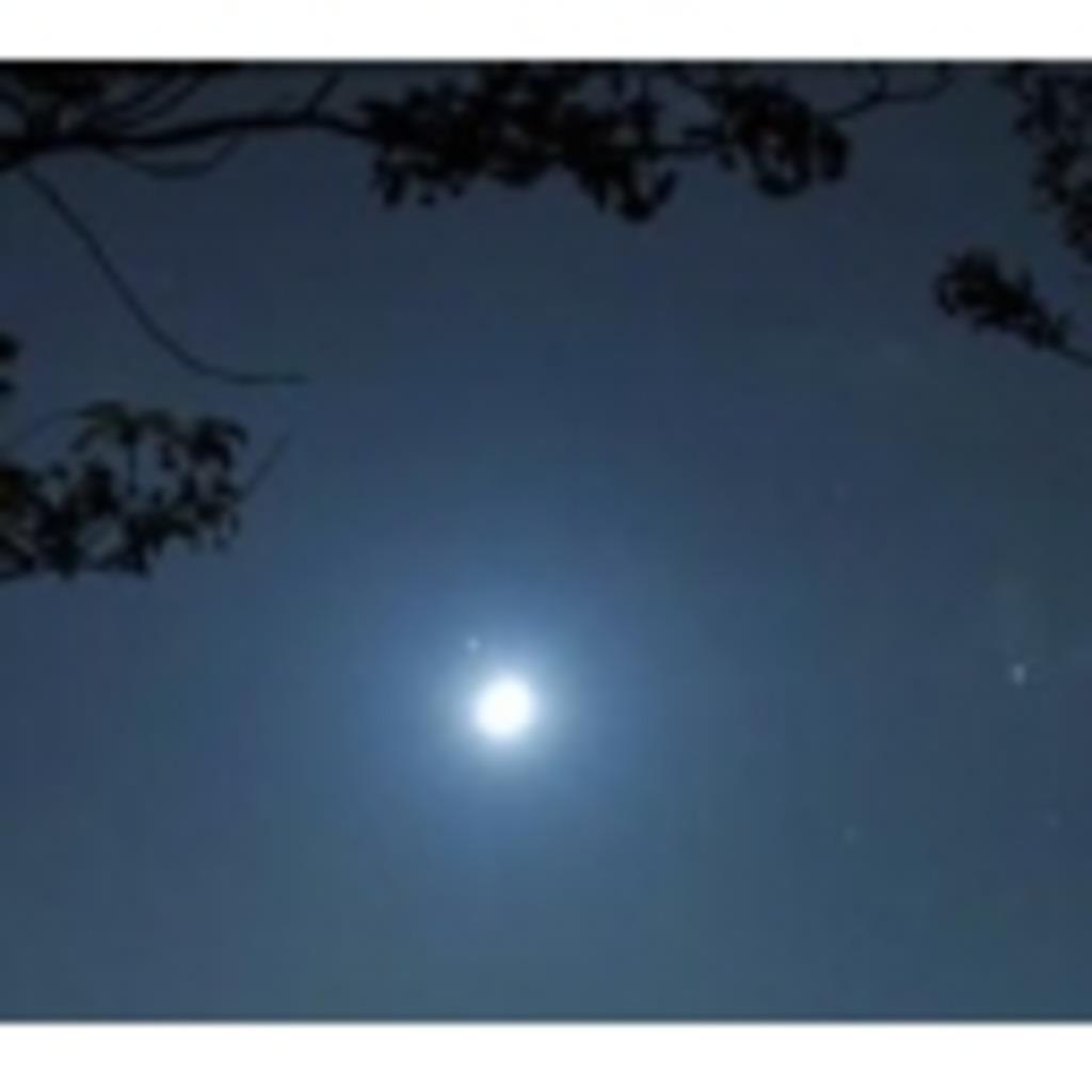 架空の居酒屋 月の夜
