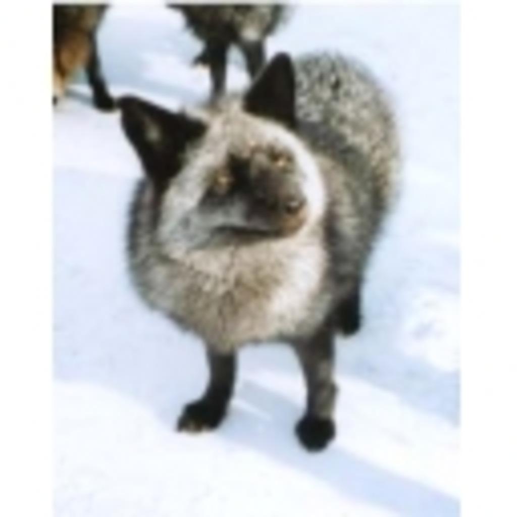銀狐の狐小屋