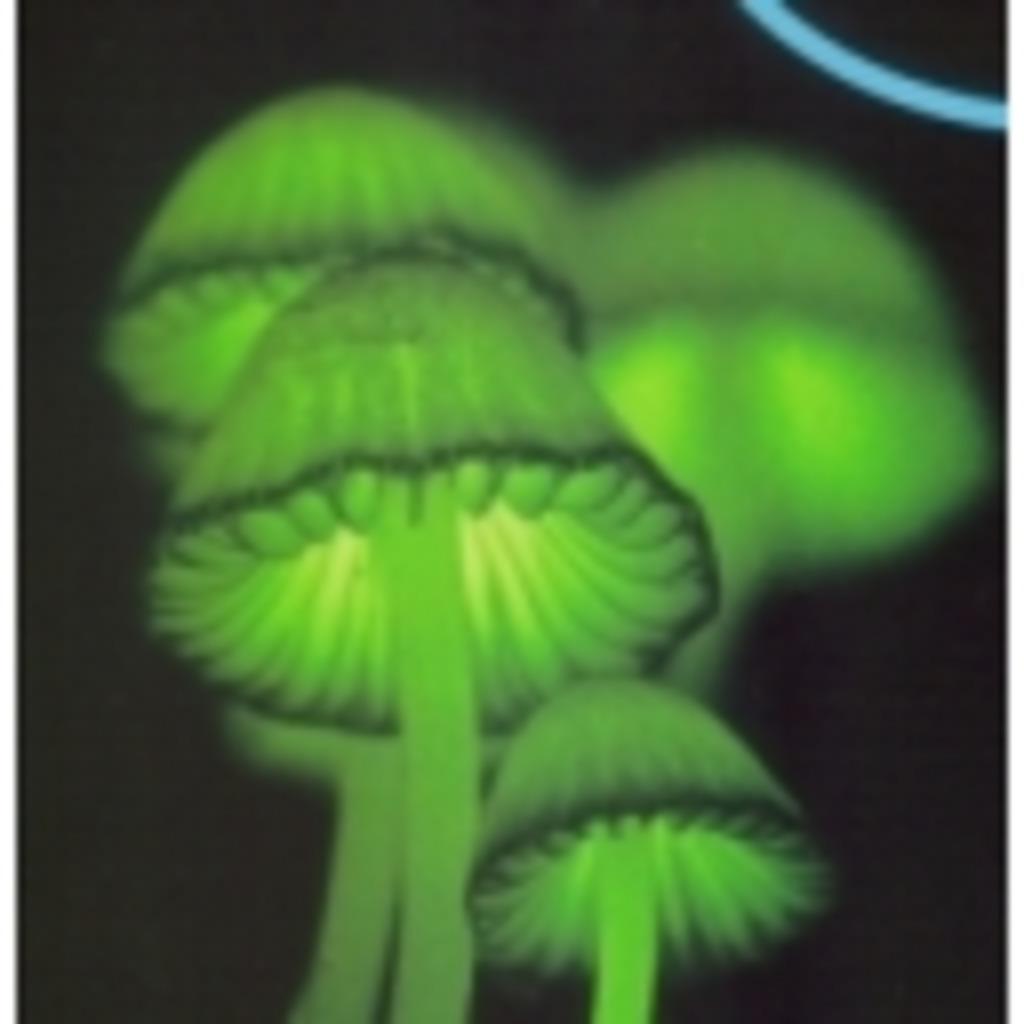 ニコマス菌類の集い