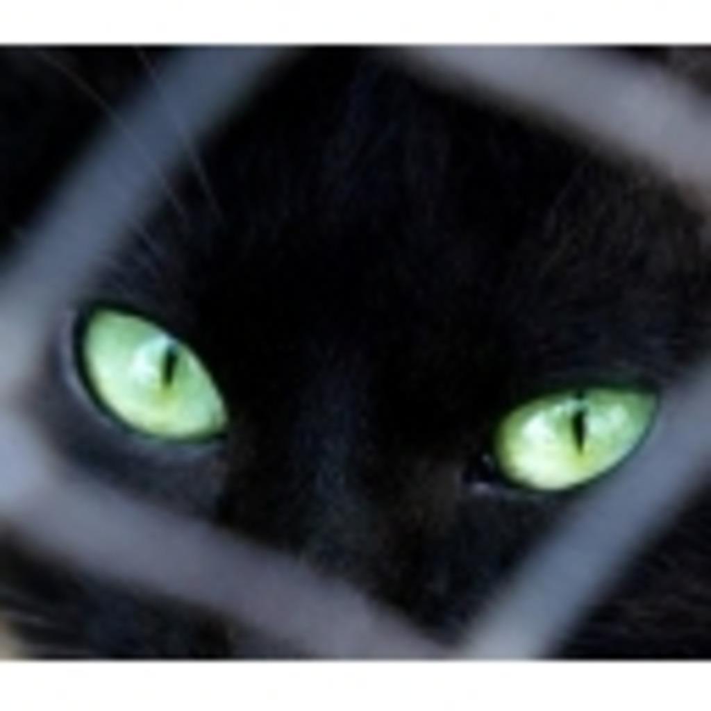 音猫(黒)「睡眠欲なら誰にも負けない」