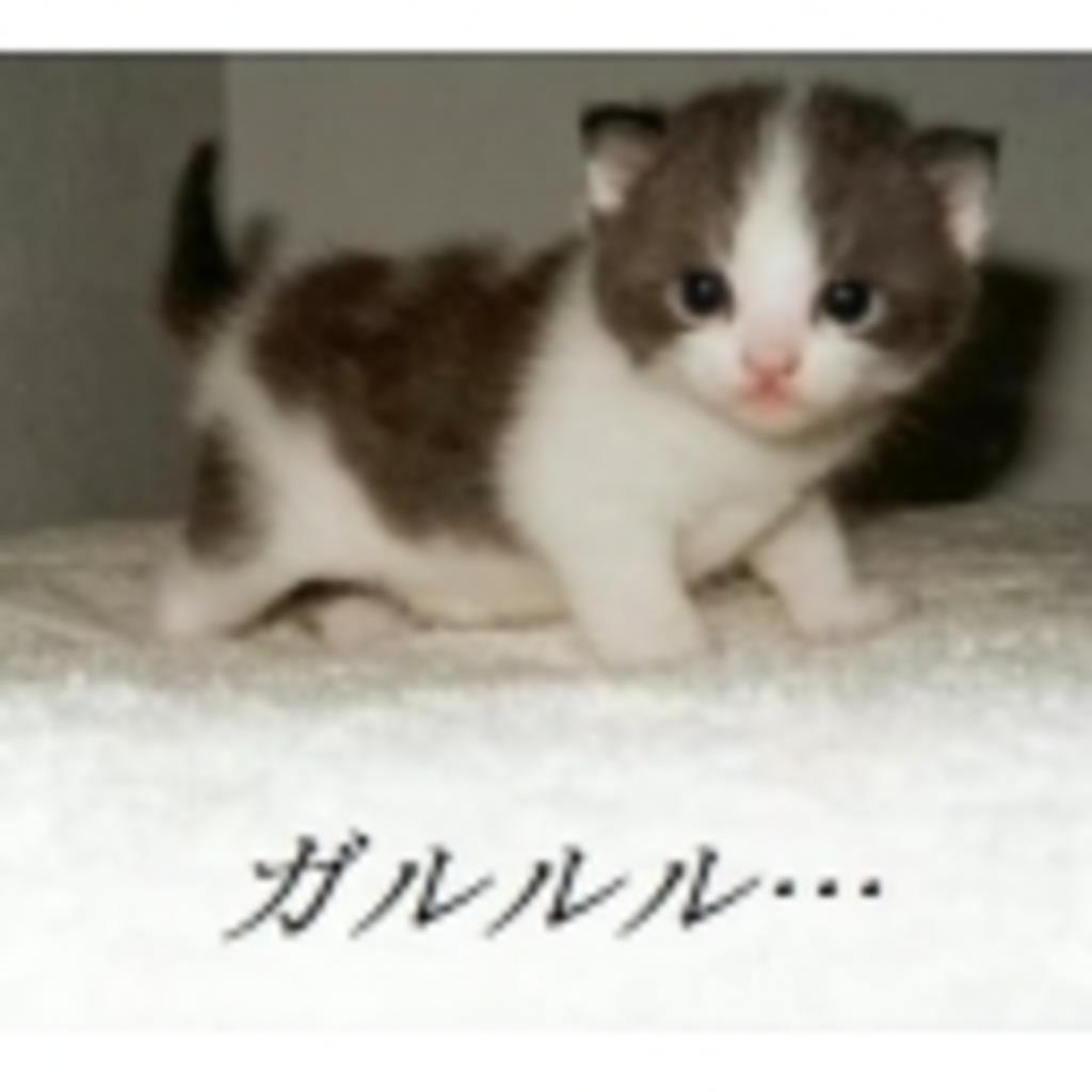 がおー(「・ω・)「☆の怒り 雑談 配信