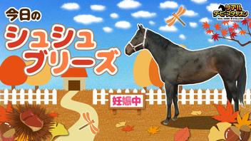 【馬房定点】今日のシュシュブリーズ 11月9日