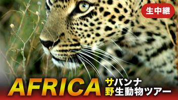 《がおーっ》アフリカ・サバンナ野生動物ツアー 生中継【10月22日 朝】