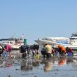 佐賀県佐賀市 有明海の絶景で楽しむ川副町観光潮干狩りの開催!