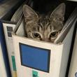 とある職場を訪れたら→ファイルに隠れて作業員をにらむ猫を発見