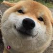おかえり~!いつも飼い主を笑顔でお出迎えするワンコが可愛い