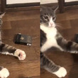 たばこを取ろうとした結果→猫パンチで禁煙を勧めてくるニャンコがめっちゃ可愛いw