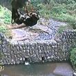【取材】蜂が防災ワイパーに巣作り!富士砂防事務所の動画が13万回超再生