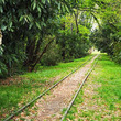 正式廃止から1年、西武安比奈線はいま 半世紀前の遺構「撤去」始まる