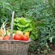 野菜のプロに聞く!家庭菜園の「初心者におすすめ野菜」5選