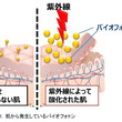 資生堂、紫外線による肌の酸化ダメージのサンスクリーンでの防止効果を可視化