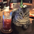 【取材】「猫とお酒が飲めるバー」が話題!人懐っこい兄弟猫がお出迎え
