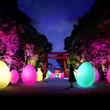 糺の森がインタラクティブな光のアート空間へ変貌 | 下鴨神社 糺の森の光の祭 Art by teamLab