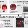 大腸癌の増悪化に関わるFusobacterium nucleatumは口腔内に由来する ~歯周病菌が大腸癌に関わっている。大腸癌の新たな治療法や予防法に繋がる可能性~