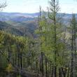 中国企業は「シベリアの理髪師」? ロシアで大規模な森林伐採